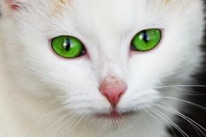 Traumdeutung-Katze