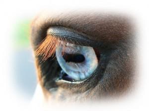Traumdeutung-Pferd