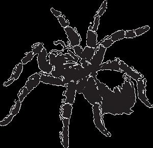 Traumdeutung-Spinne